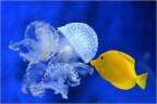 Geel en blauw