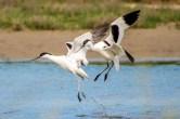 2014 Jan van Bers Dansende vogels