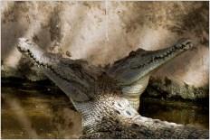 2014 John Verschuren Crocodillendans