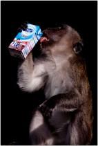 2014 John Verschuren Friesche vlag met aap