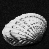 WGM 170322 Peter Lambrechts (7)