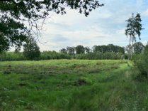 Einer der Leuchtturmstandorte auf freigestellter Heidefläche. (Foto: Schmälter)