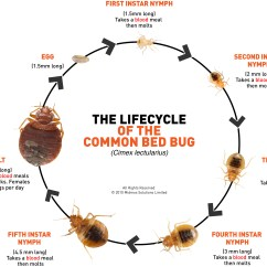 Hissing Cockroach Diagram 1999 Ford Windstar Fuel Pump Wiring Bed Bugs  Extension Entomology