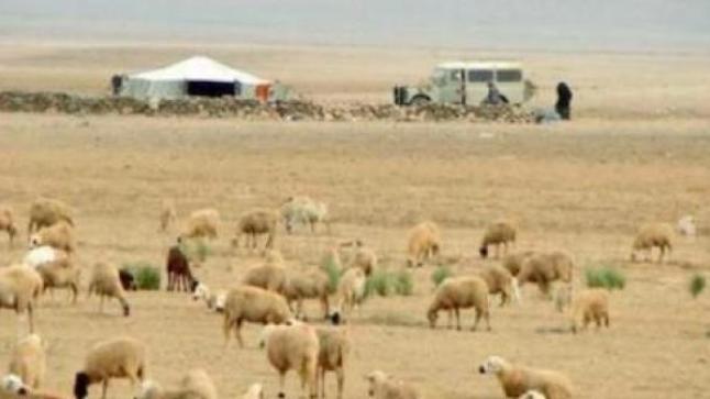 برلماني من حزب أخنوش يتهم ساكنة تيزنيت بالاعتداء على الرعاة الرحل ويسائل وزير الداخلية