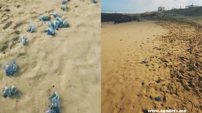 """""""القناديل الحارقة"""" تغزو شاطئ بأكلو وتمنع المواطنين من الاستمتاع بالبحر (فيديو)"""