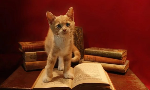 ATG Quirkies: Cats in the Dropbox, Bats in the Stacks