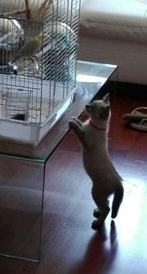 gato cerca jaula inseparable