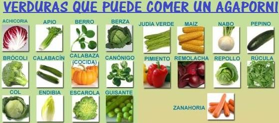 verduras alimentacion que puede comer un inseparable