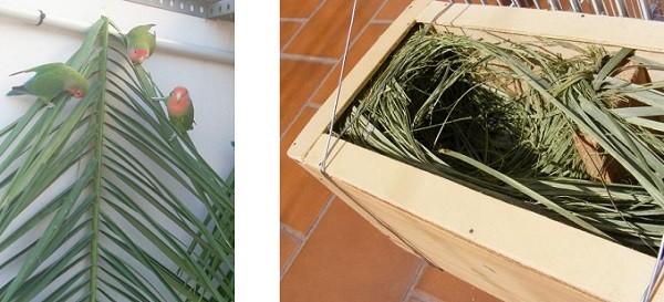 hojas de palmera para nido pajaros