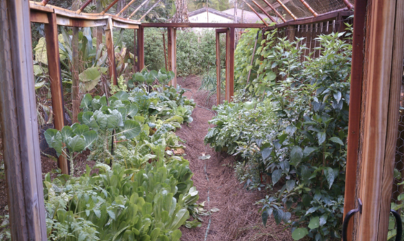 Raised Vegetable Garden Materials