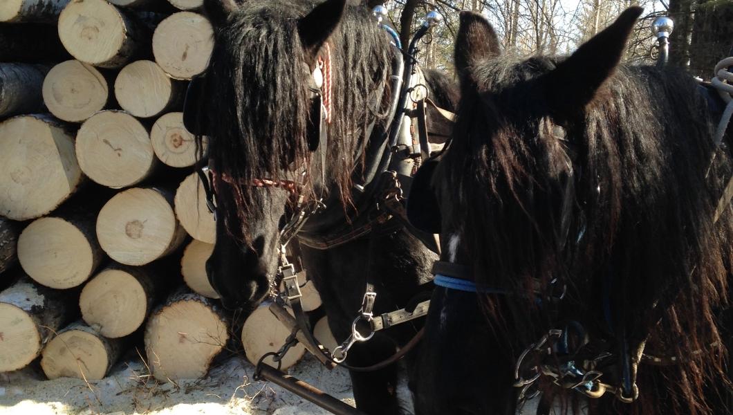 2 horses pile