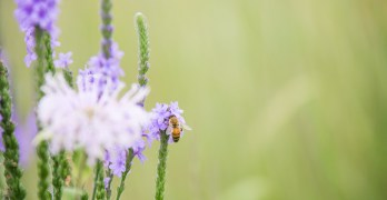 A Poetry Event for the Bees