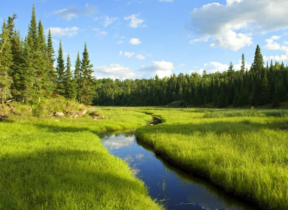 A creek running through an old beaver meadow, or beaver pond that has drained and become a meadow, near Junction Bay in Voyageurs National Park. Photo by Tom Gable.