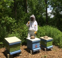AG Busy Bee Honey Factory