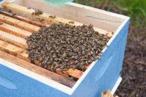 bee_apiary_3