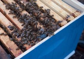 bee_apiary_7