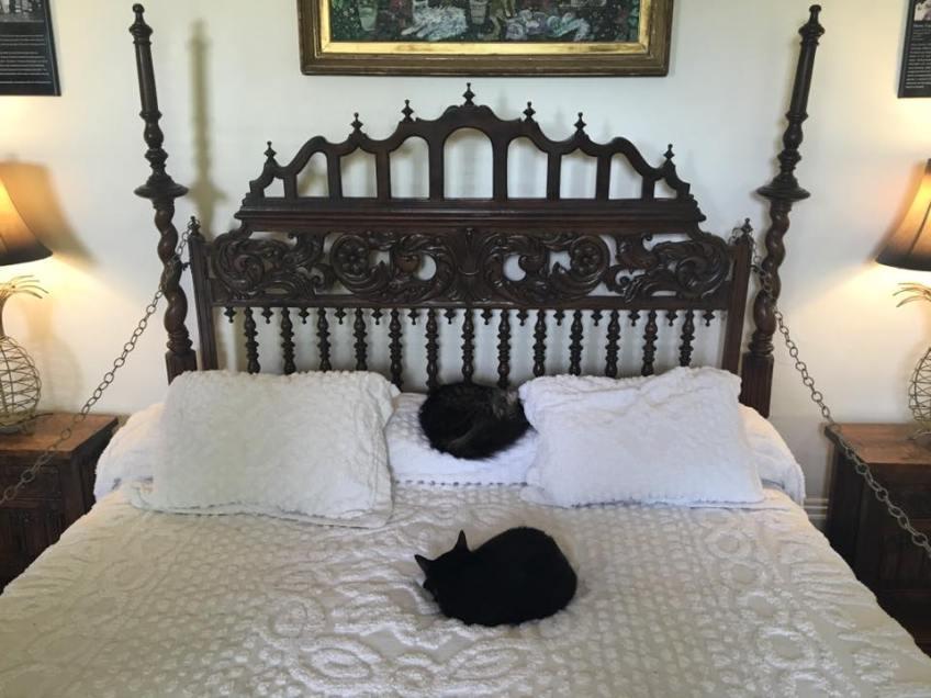 Key West Hemingway House cats