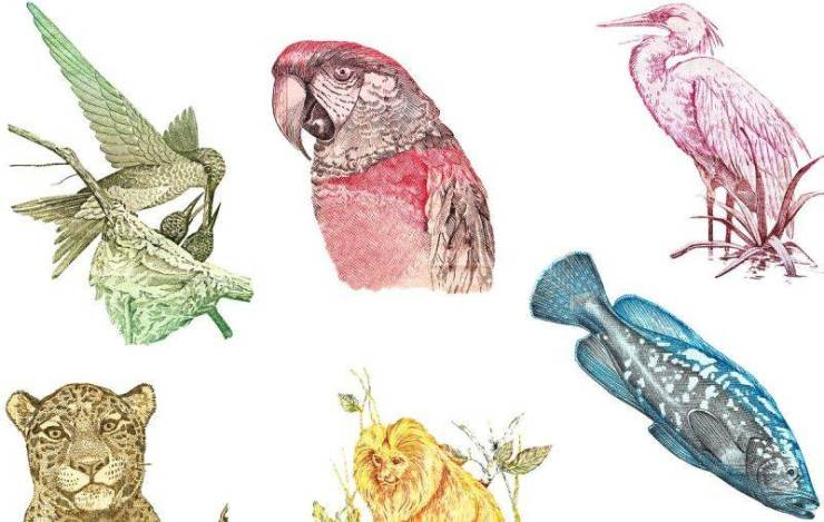 Animals on Brazilian bank notes