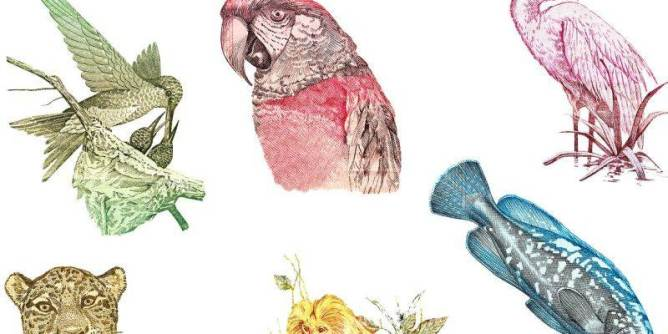 Animals on Brazilian bank notes