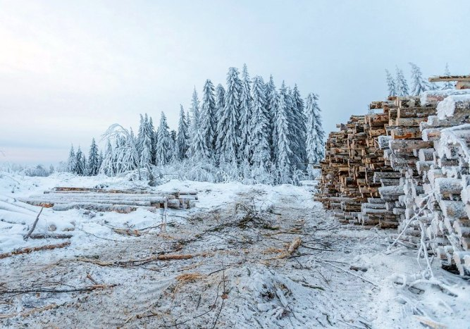 Photo: Woods and lumber in winter.