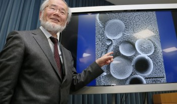 Yoshinori Ohsumi mechanism for autophagy