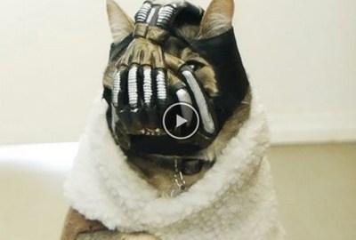 kiff du jour agence talisman bane cat le chat