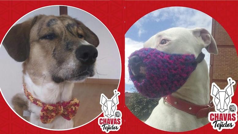 Chavas Tejidos, un joven bogotano que teje bozales, corbatines y bufandas para perros y gatos