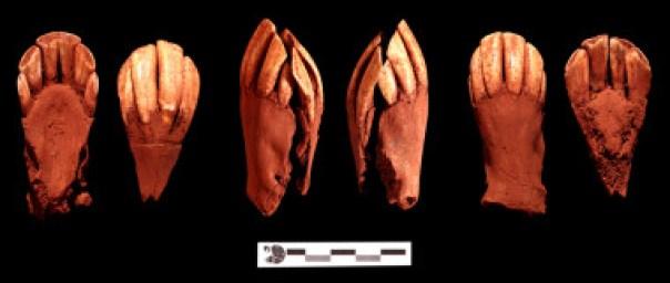 Pares mandibulares de guanaco adulto que formaban parte del ajuar singular del enterramiento/ Fotos cedidas por Thierry Dupradou
