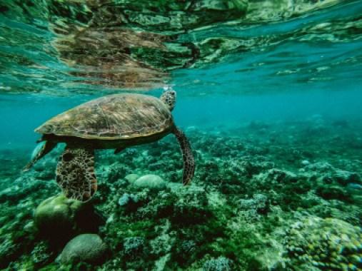 <p>Las áreas salvajes e inalteradas poseen niveles masivos de biodiversidad y especies endémicas. / Belle Co</p>