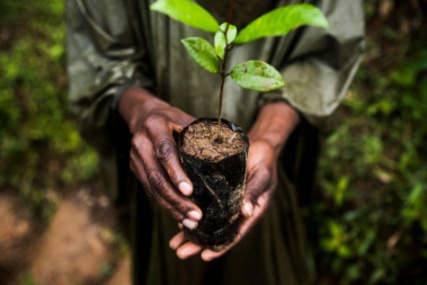 <p>Empoderar a los pueblos indígenas será clave para la conservación de ecosistemas / Joan de la Malla</p>
