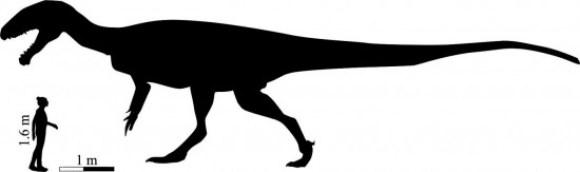 Silueta del enorme dinosaurio carnívoro de Lesoto al lado de un ser humano a escala / Fabien Knoll y Lara Sciscio