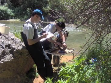 El área de estudio comprendió los cauces principales de las cuencas de los ríos Júcar, Cabriel y Turia