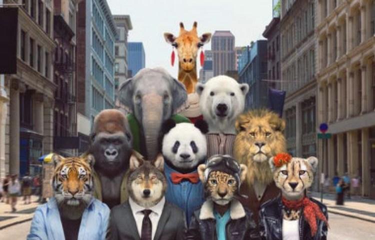 <p>El león, el elefante y la jirafa son tres de los diez animales más carismáticos que se encuentran en peligro de extinción. /Zoo Portraits</p>