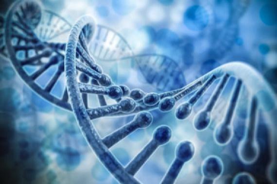 <p>El 98% de nuestro ADN no codifica para proteínas. Estas regiones de ADN contienen miles de genes no codificantes que no están caracterizados y todavía queda un largo camino hasta que comprendamos sus funciones y su papel en las enfermedades / Fotolia</p>