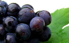 Un nuevo sistema permite monitorizar el rendimiento de la uva