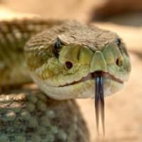 Serpientes como antibióticos