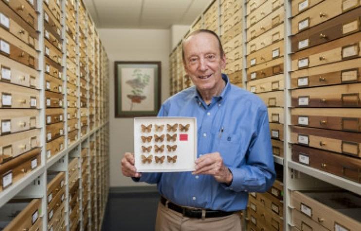 <p>El entomólogo estadounidense Thomas Emmel en 2018 con la colección de <em>Cyllopsis tomemmeli </em>que recogió en México a la edad de 17 años. / Kristen Grace (Florida Museum)</p>