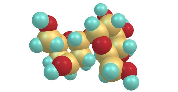 trehaloza: molekula