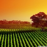 O Plantio e a Colheita