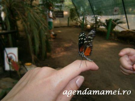 fluturi_tropicali