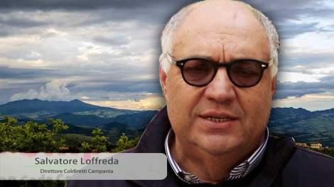 Salvatore Loffreda