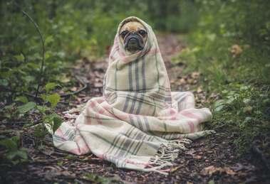 ansia cani