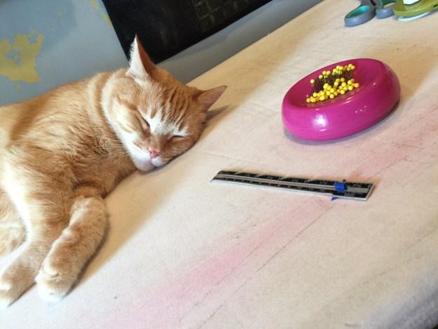 Big Mr Red kitty working hard.