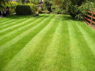 lawn with good quality grass with stripes