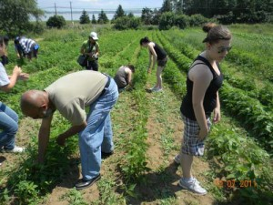 Helping a senior's farm in Bathurst