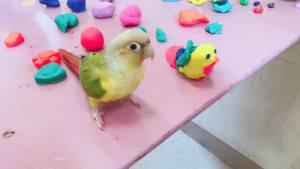 Olivia's pet bird