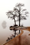 tree in the mist