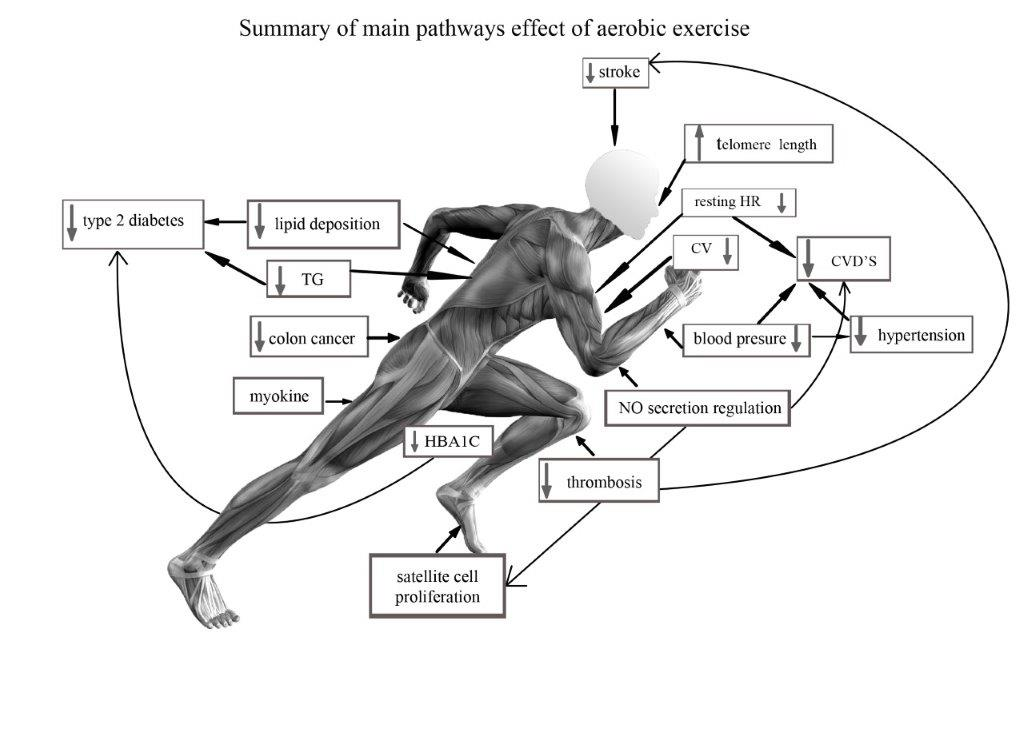 A Review of Exercise as Medicine in Cardiovascular Disease