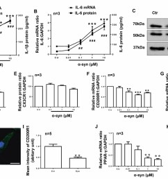 figure 4 cd200r1 is more sensitively regulated by syn in microglia primary cultured microglia were prepared from cerebral cortices of sd rats p0 and  [ 1484 x 882 Pixel ]