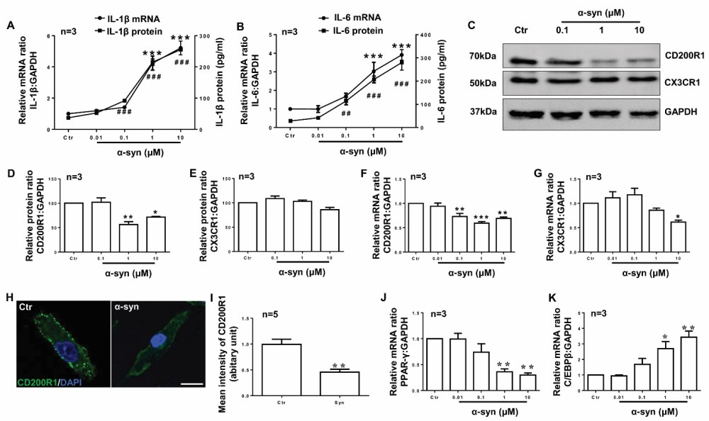 medium resolution of figure 4 cd200r1 is more sensitively regulated by syn in microglia primary cultured microglia were prepared from cerebral cortices of sd rats p0 and